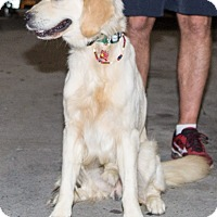 Adopt A Pet :: Theodore - BIRMINGHAM, AL