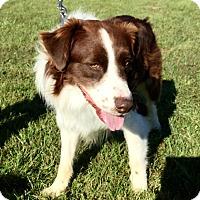Adopt A Pet :: Ziggy - Goshen, KY
