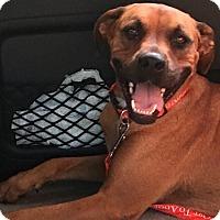 Adopt A Pet :: Blythe - Oakland, AR