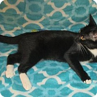 Adopt A Pet :: Inky - Marlborough, MA