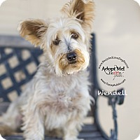 Adopt A Pet :: WENDELL - Inland Empire, CA