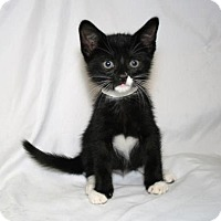 Adopt A Pet :: Cabernet - Bradenton, FL