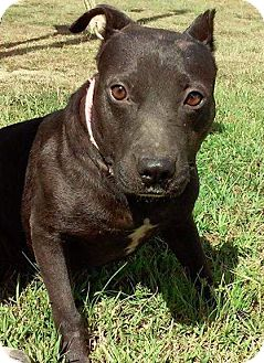 Terrier (Unknown Type, Medium) Mix Dog for adoption in Union Springs, Alabama - Zoey