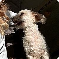 Adopt A Pet :: Max - Redmond, WA