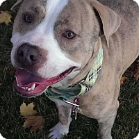 Adopt A Pet :: Nayan - Salt Lake City, UT
