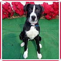 Adopt A Pet :: DAISY - Marietta, GA