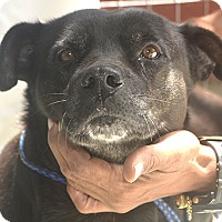Adopt A Pet :: Rolly Polly - St. Thomas, VI