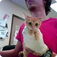 Adopt A Pet :: FRED - Conroe, TX