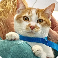 Adopt A Pet :: Austin - Studio City, CA