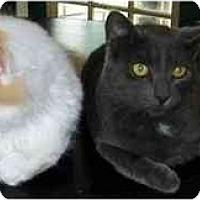 Adopt A Pet :: Smokey - Sheboygan, WI