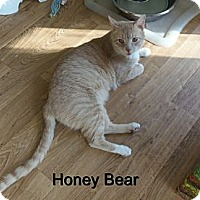 Adopt A Pet :: Honey Bear - Catasauqua, PA