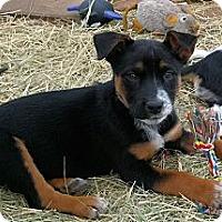 Adopt A Pet :: Riley - Waller, TX