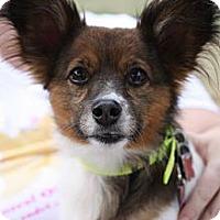 Adopt A Pet :: George - Hilliard, OH