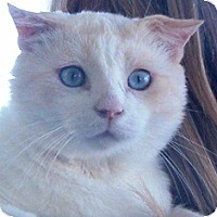 Adopt A Pet :: Duke - Pasadena, CA