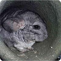 Adopt A Pet :: Chipotle (Chip) - Virginia Beach, VA