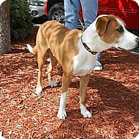 Adopt A Pet :: THUNDER - Wilmington, NC