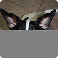 Adopt A Pet :: Mindy - Stilwell, OK