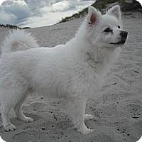 Adopt A Pet :: Kishi - Rigaud, QC