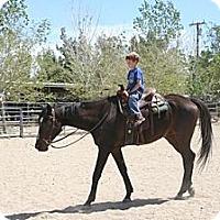 Adopt A Pet :: Antidote - Pinon Hills, CA