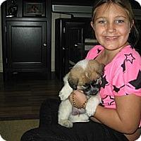 Adopt A Pet :: Fuzzball - Plano, TX