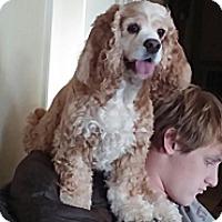 Adopt A Pet :: Freckles - Marietta, GA