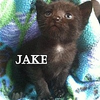 Adopt A Pet :: Jake - Union, KY