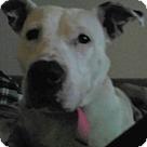 Adopt A Pet :: Betty White