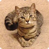 Adopt A Pet :: Ginger (CL) - Bentonville, AR