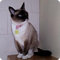 Adopt A Pet :: Nebula - Lakewood, CO