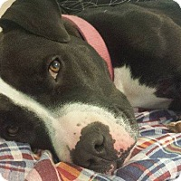 Adopt A Pet :: Susie - Davison, MI
