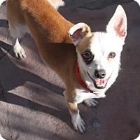 Adopt A Pet :: Hobbes - Henderson, NV