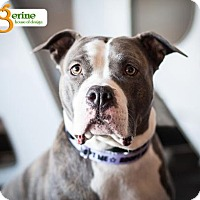 Adopt A Pet :: Stella - Mayer, MN