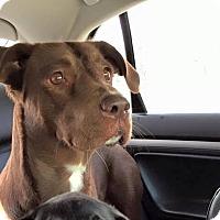 Adopt A Pet :: Mimi - Elyria, OH