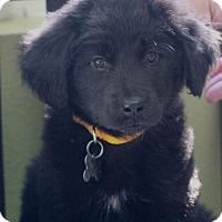 Adopt A Pet :: Ted - Woonsocket, RI