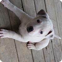 Adopt A Pet :: Flake - East Enterprise, IN