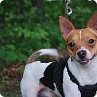 Adopt A Pet :: Milo - New Castle, PA