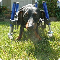 Adopt A Pet :: Jax - Anaheim, CA