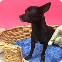 Adopt A Pet :: Lavern - Decatur, AL