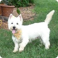 Adopt A Pet :: Bree-Pending Adoption - Omaha, NE