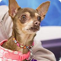 Adopt A Pet :: Penny - Grand Rapids, MI