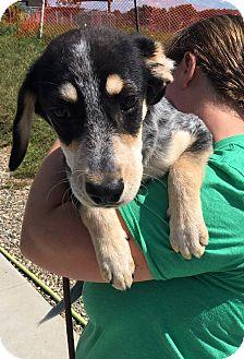 Terrier (Unknown Type, Medium)/Beagle Mix Dog for adoption in Battle Creek, Michigan - Rucker