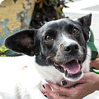 Adopt A Pet :: Leslie Jones - Jersey City, NJ