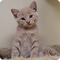 Adopt A Pet :: Luschek - Middletown, OH
