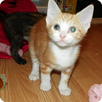 Adopt A Pet :: Lucas - Whitehall, PA