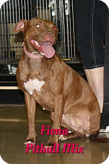 Pit Bull Terrier Mix Dog for adoption in Cheney, Kansas - Fiona