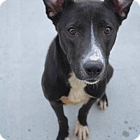 Adopt A Pet :: Skeeter - Prince George, VA