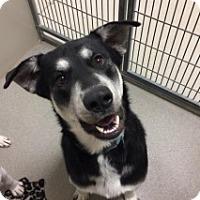 Adopt A Pet :: Ramses  Vtg 110769 - Joplin, MO