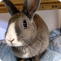 Dwarf Mix for adoption in Vernon, British Columbia - Buggs