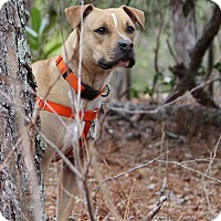 Adopt A Pet :: Sweetie - Pinehurst, NC