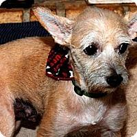 Adopt A Pet :: CANDY - Beavercreek, OH